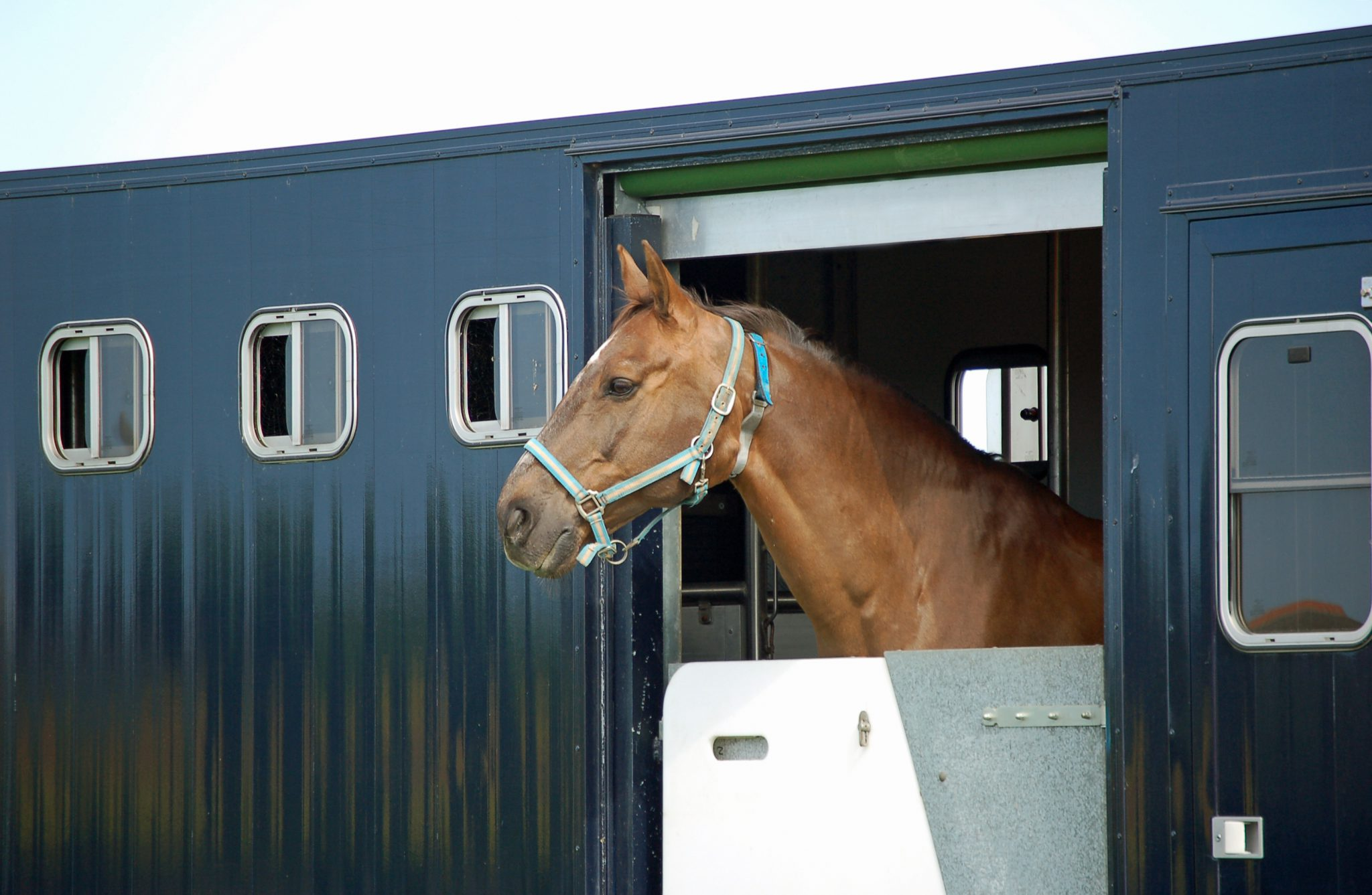 Horse box insurance