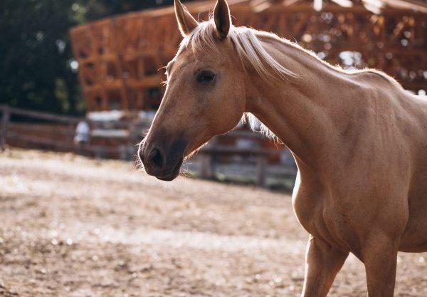 Horsebox Insurance. Horsebox Breakdown Cover (3)