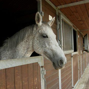 Insurance For Horsebox (2)