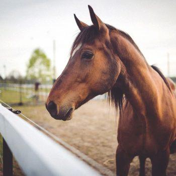Insurance For Horsebox