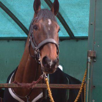 Horsebox Insurance (1)