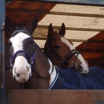Horsebox Insurance (2)